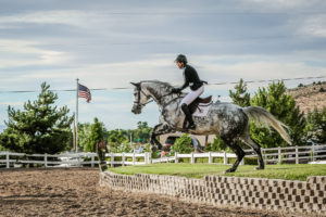 image of horse jumping